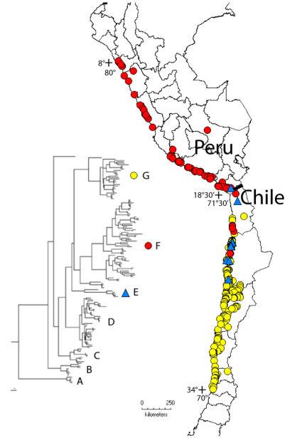 Nolanasupplementm biogeographic diversification in nolana solanaceae a ubiquitous member of the atacama and peruvian deserts along the western coast of south america ccuart Choice Image
